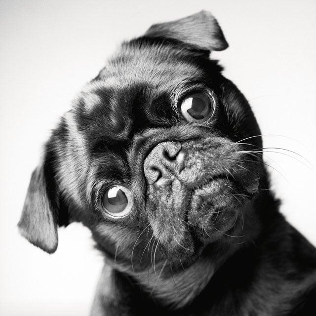 Dog Years_Fred_2years