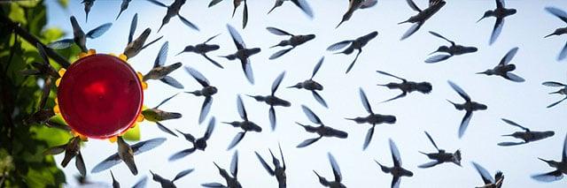 A Hummingbird Swarm Photo Shot with a Mirror and a Bird Feeder