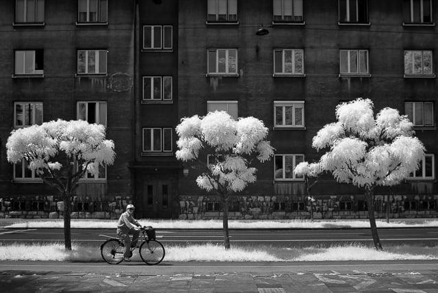 cotton-trees-luka-gorjup-2