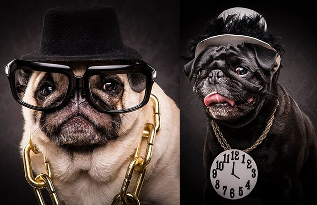 The Pug Life: Portraits of Pugs Posing as 80s and 90s Hip-Hop Artists