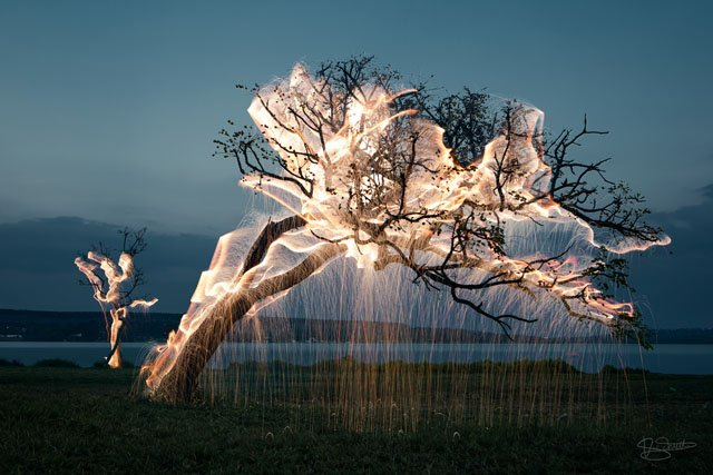 Photographer Uses Fireworks and Long Exposures to Make Trees Drip Light