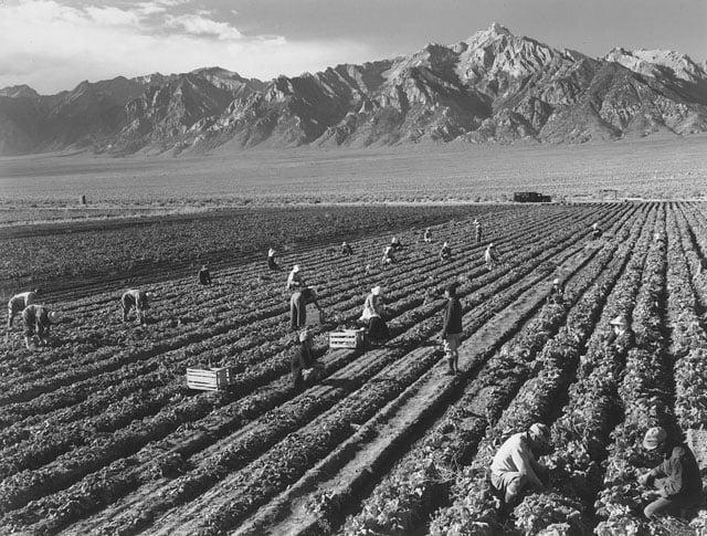 Farm, farm workers, Mt. Williamson in background.