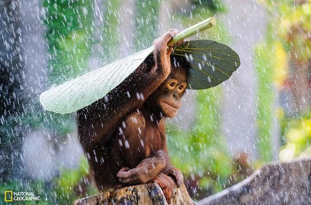 Đây là những bức ảnh chiến thắng cuộc thi National Geographic Photo năm nay - 106173