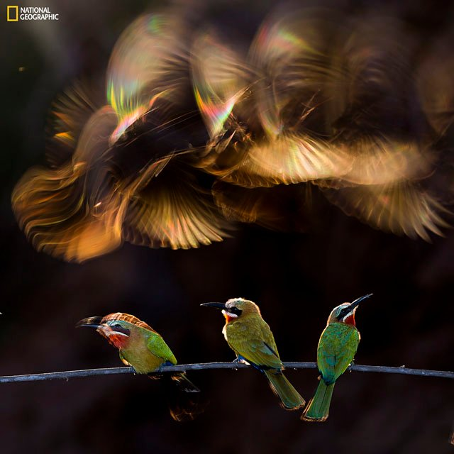 Photo and caption by Bence Mate / National Geographic 2015 Photo Contest