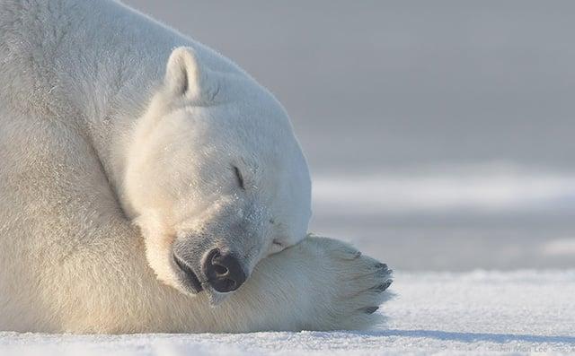 polar_sunday