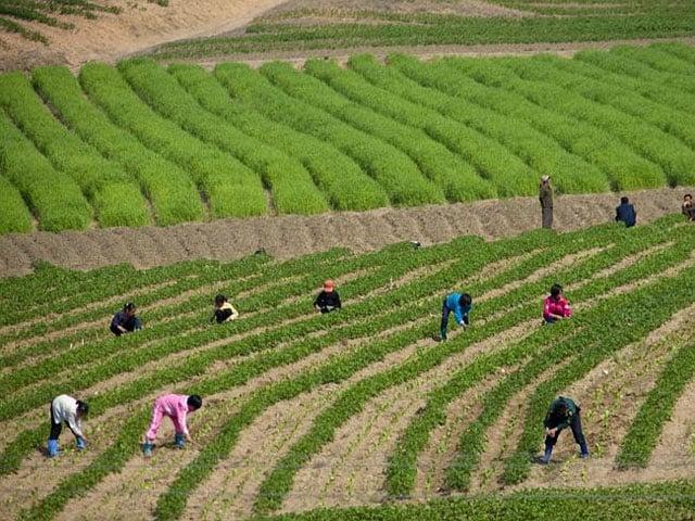 Children seen farming in the fields.