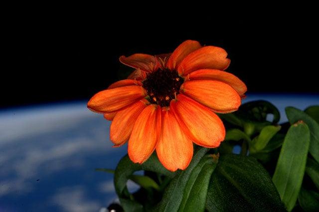 spaceflowerhead