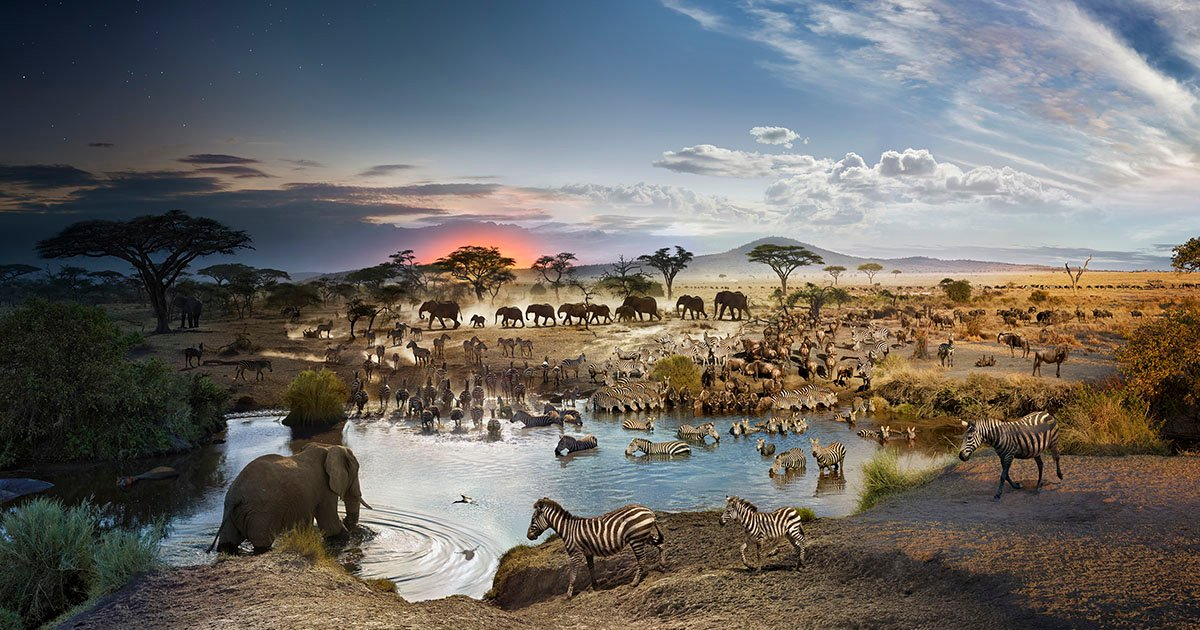 This Photo Was Shot Over the Course of 26 Hours at an African Watering Hole