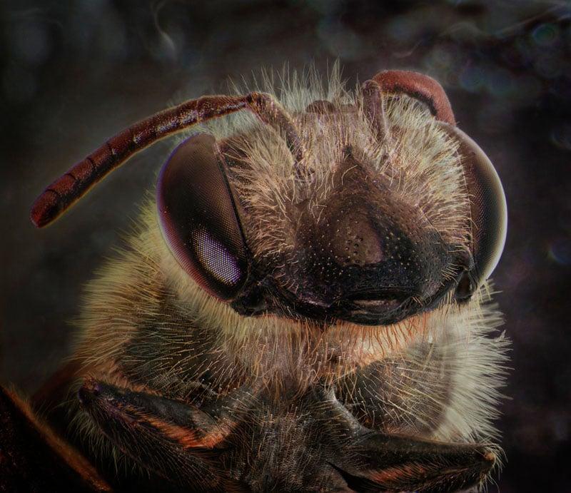 Sidewalk Crack, September 24th  [Bee]