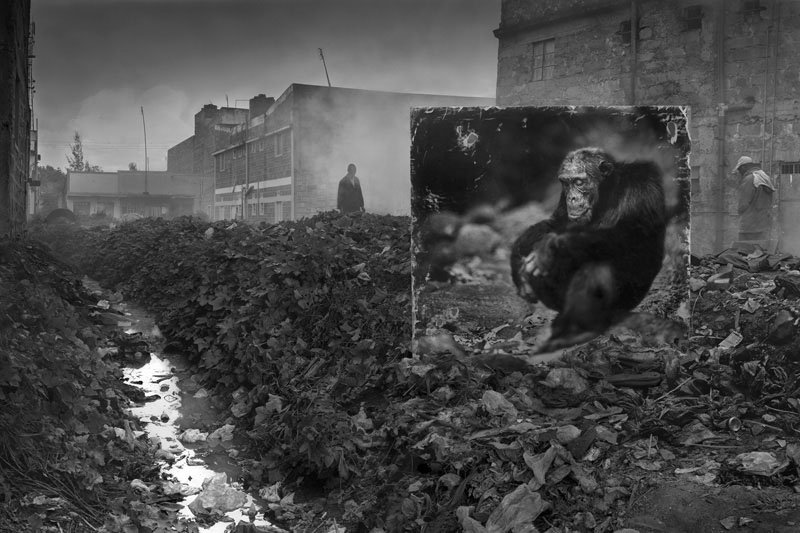 ALLEYWAY-WITH-CHIMPANZEE-800px
