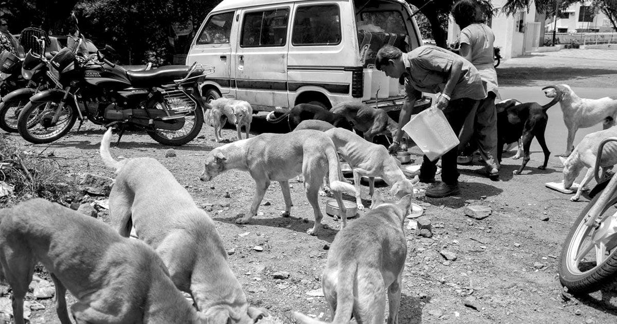 Photo Essay: The Dog Savior