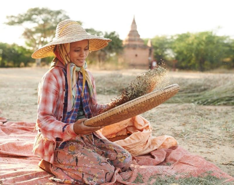 Chafing_Soybeans_Bagan_Myanmar_Patrick_Niddrie