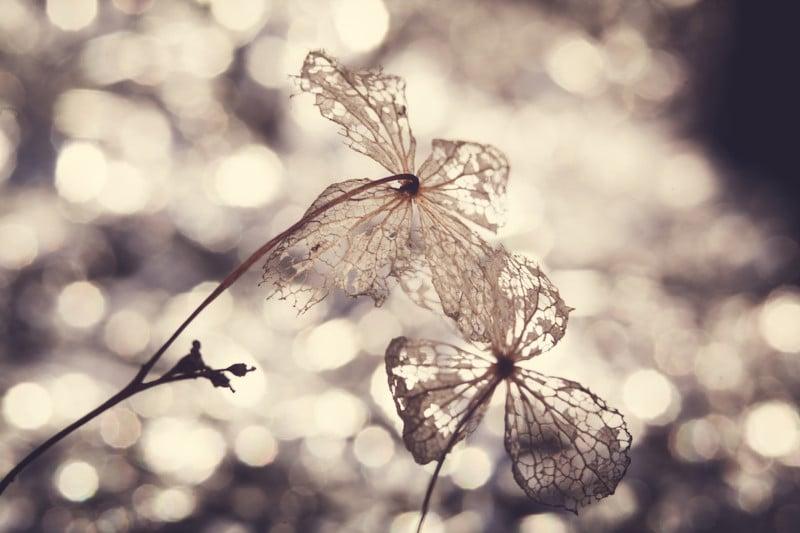 © Tamara Skudies