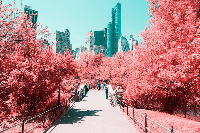 Central Park Turns Cotton Candy Pink in These 'Infrared' Photos
