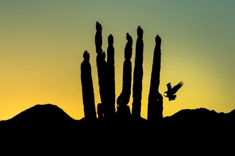 Credit: Turkey Vulture. Blake Shaw/Audubon Photography Awards