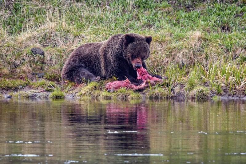 Yellowstone-National-Park-1