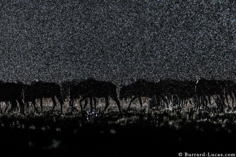 willbl-night-16