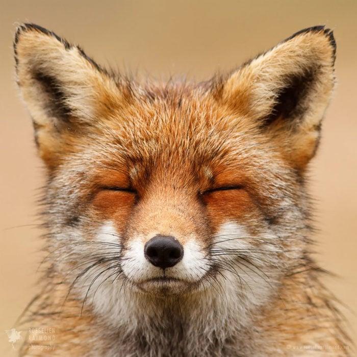 foxfaces_2