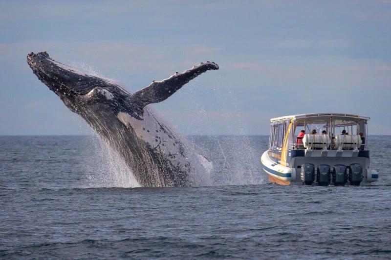 whalewatchfeat
