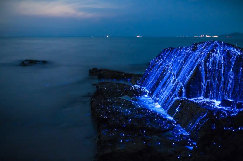 & Shooting Sea Fireflies Lighting Up the Rocks On a Japanese Beach