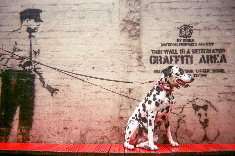 Graffiti Area by Saffron Saidi. This is the cover photo of the MyLondon calendar.