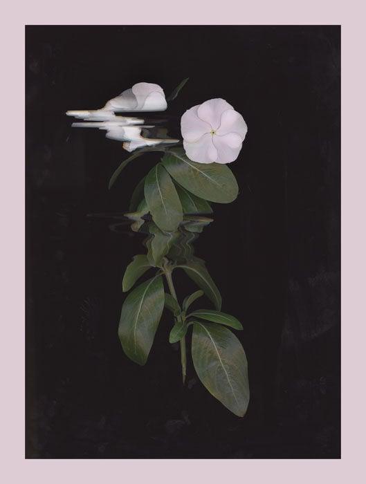 epsonv600_flower1