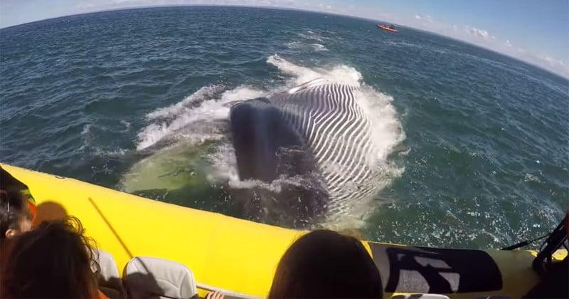 whaleencounterfeat