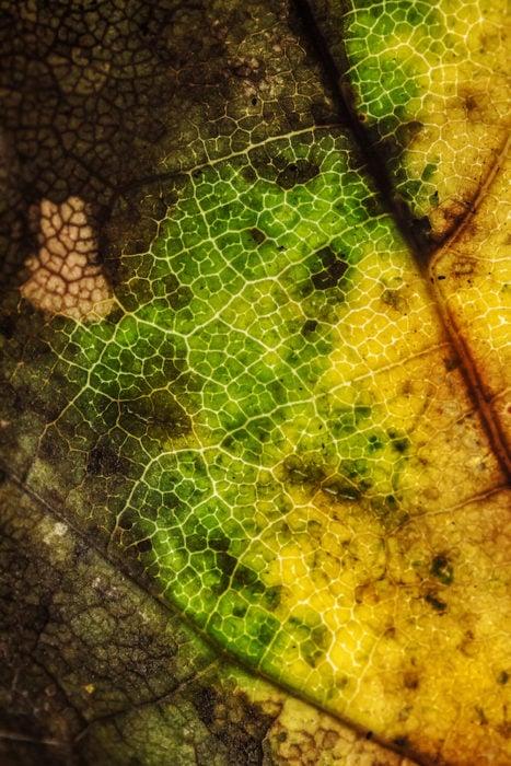 leaves07