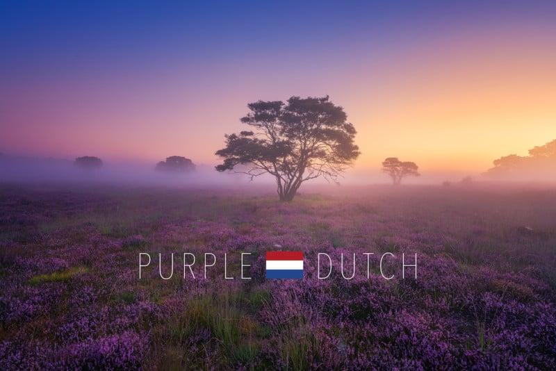 Purple Dutch Cover