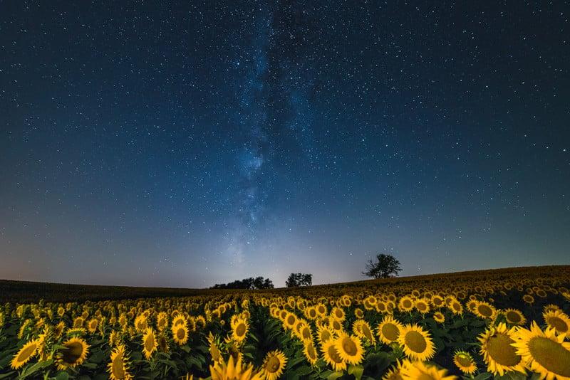 rheffron_sunflowergalaxy