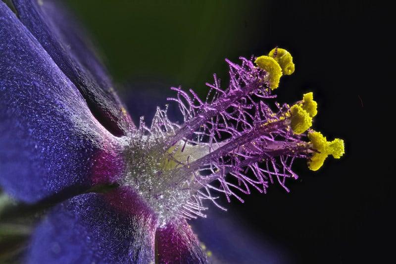 Wildflower stamens   Photo credit: Samuel Silberman