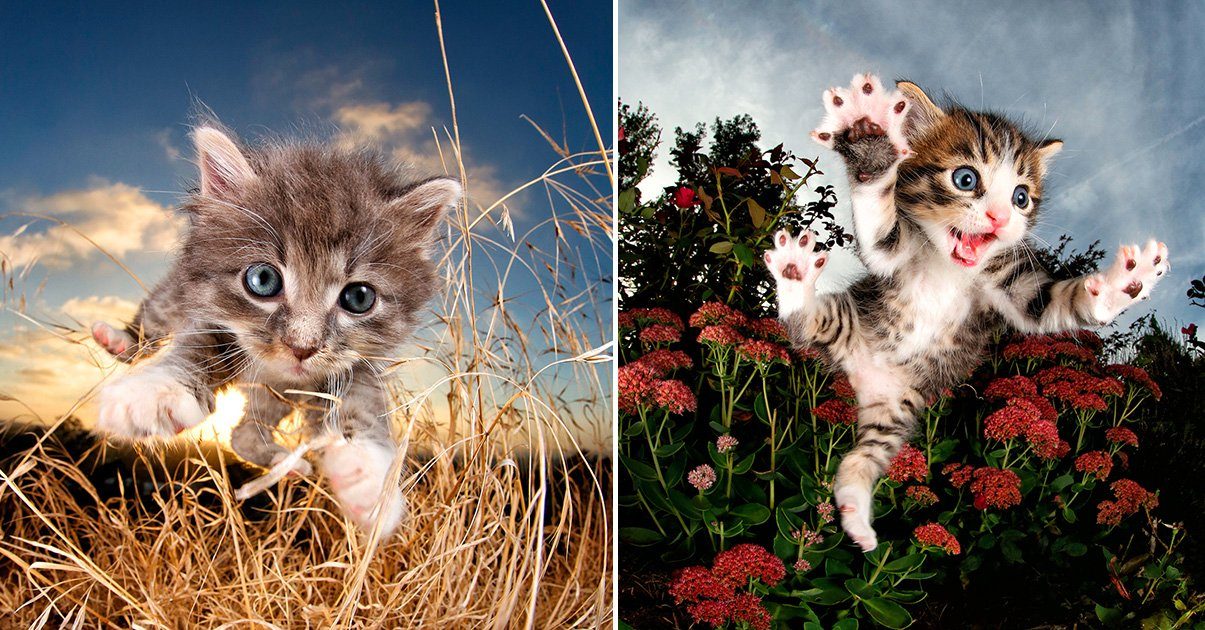 Playful Portraits Of Kittens Mid Pounce