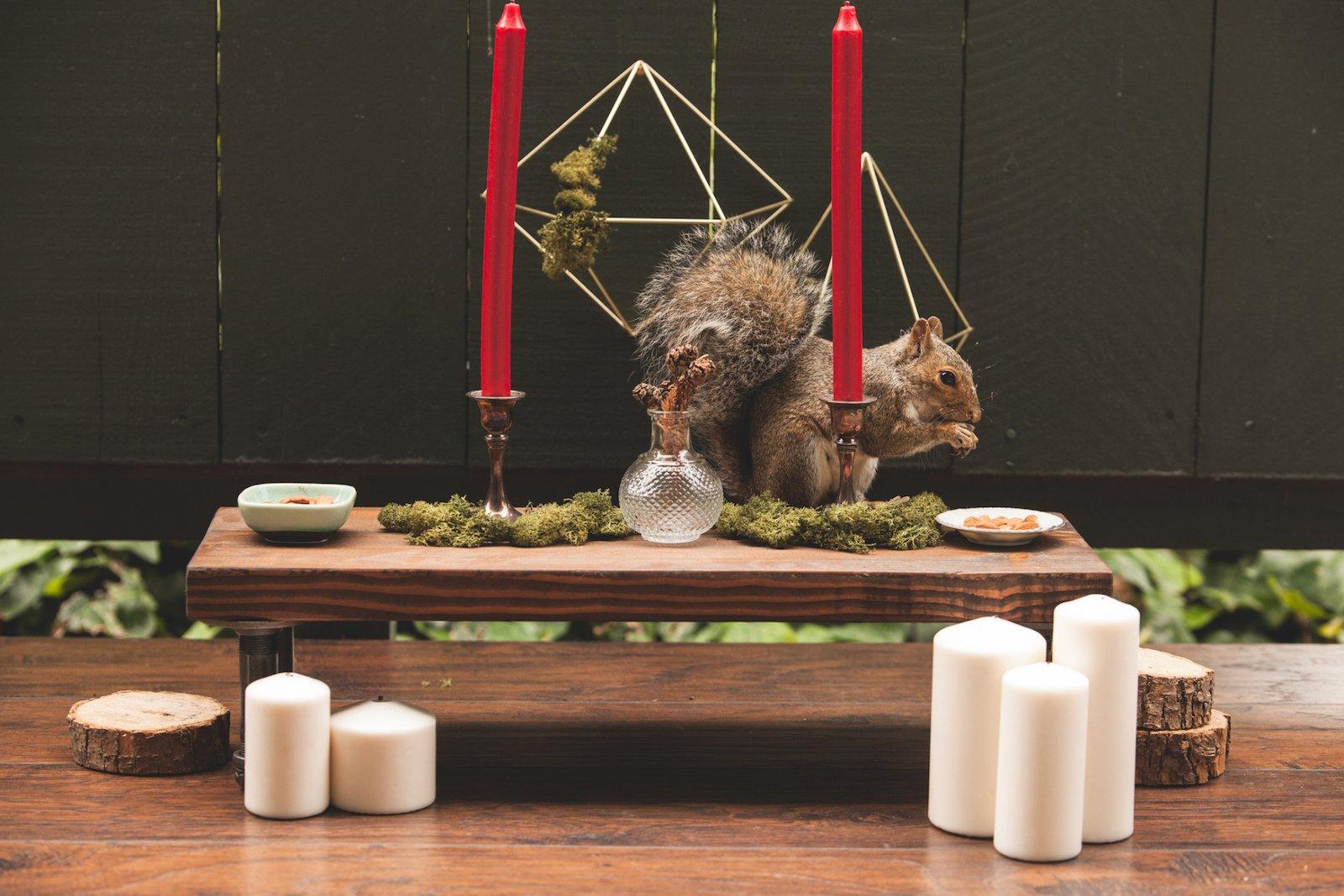 squirrels4