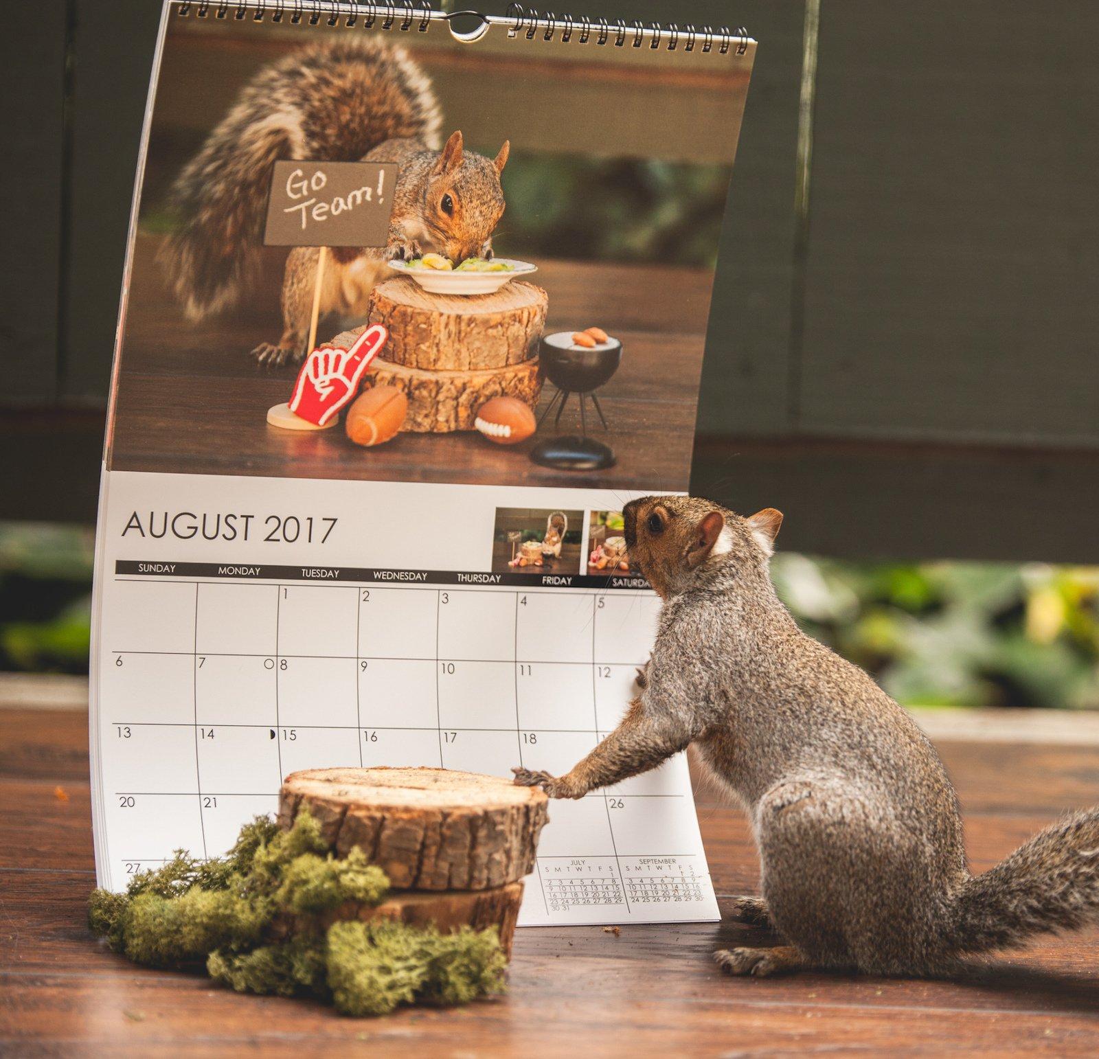 squirrels8