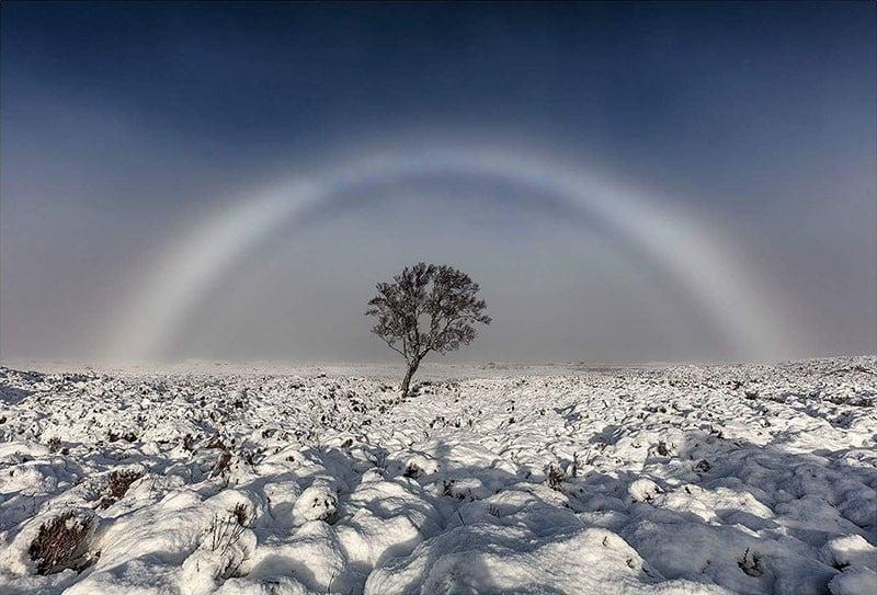 whiterainbow