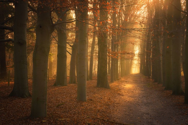 16-the-golden-path