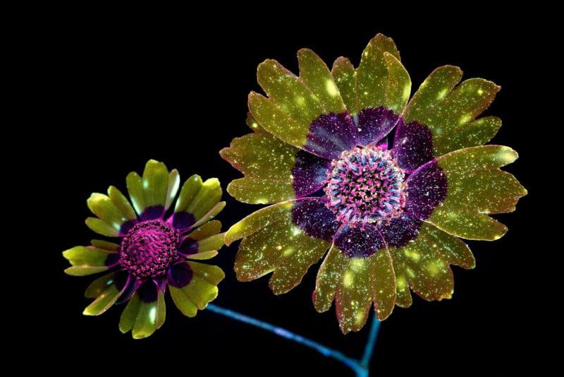 Цветы лёгкие