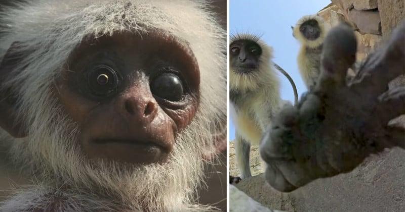 BBC Uses Creepy Animal Spy Cameras to Get Close-Up Shots of Wildlife