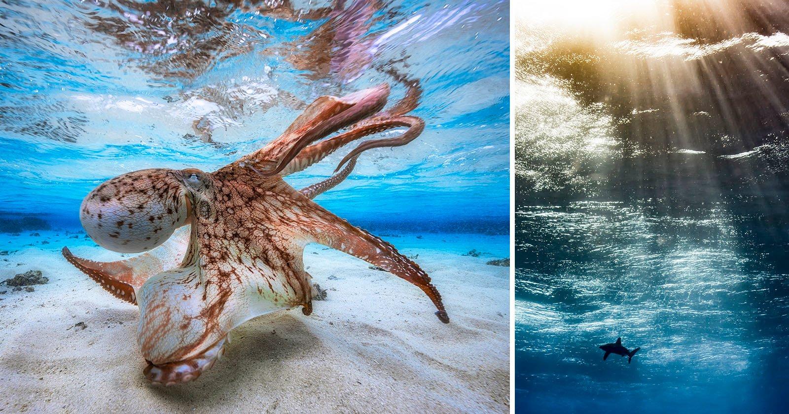 underwater photographer winning amazing junk throw lens actually petapixel