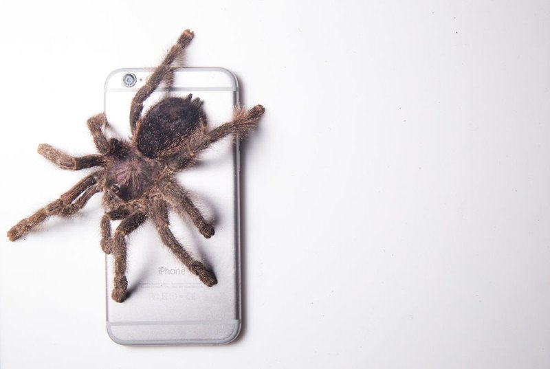 How to Photograph Bugs on a White Background in the Field
