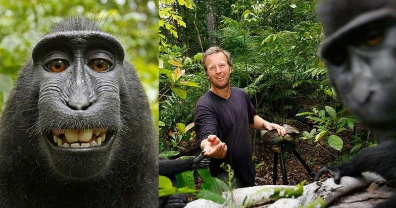 PETA hopes monkey selfie settlement will create awareness for endangered animal