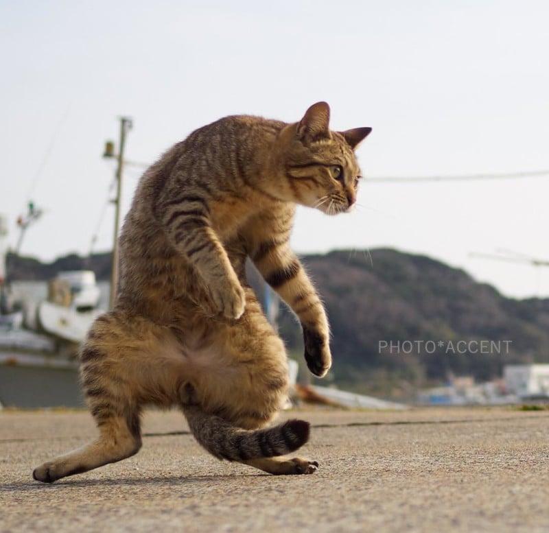 Photos Of Cats Doing Martial Arts