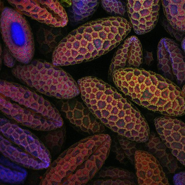 6-lily-pollen.jpg