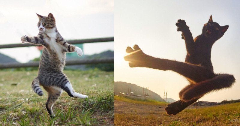 Photos of Cats Doing Martial Arts