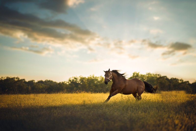 When a Portrait Photographer is Asked to Photograph a Horse…