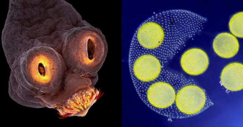 The 20 Best Microscope Photos from the 2017 Nikon Small World Contest