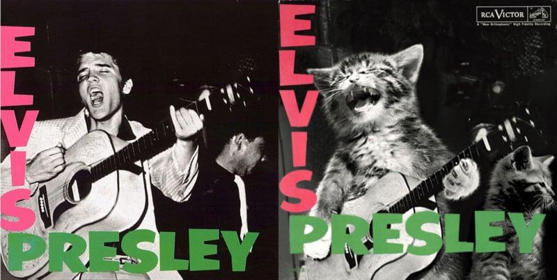 famous album covers recreated as cat photos