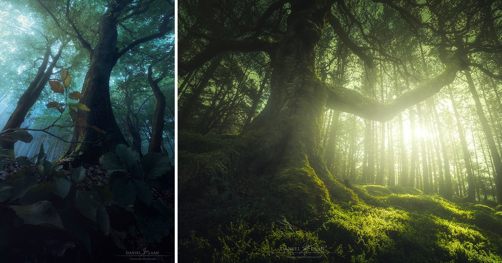 How to Shoot Epic Wide-Angle Photos of Trees