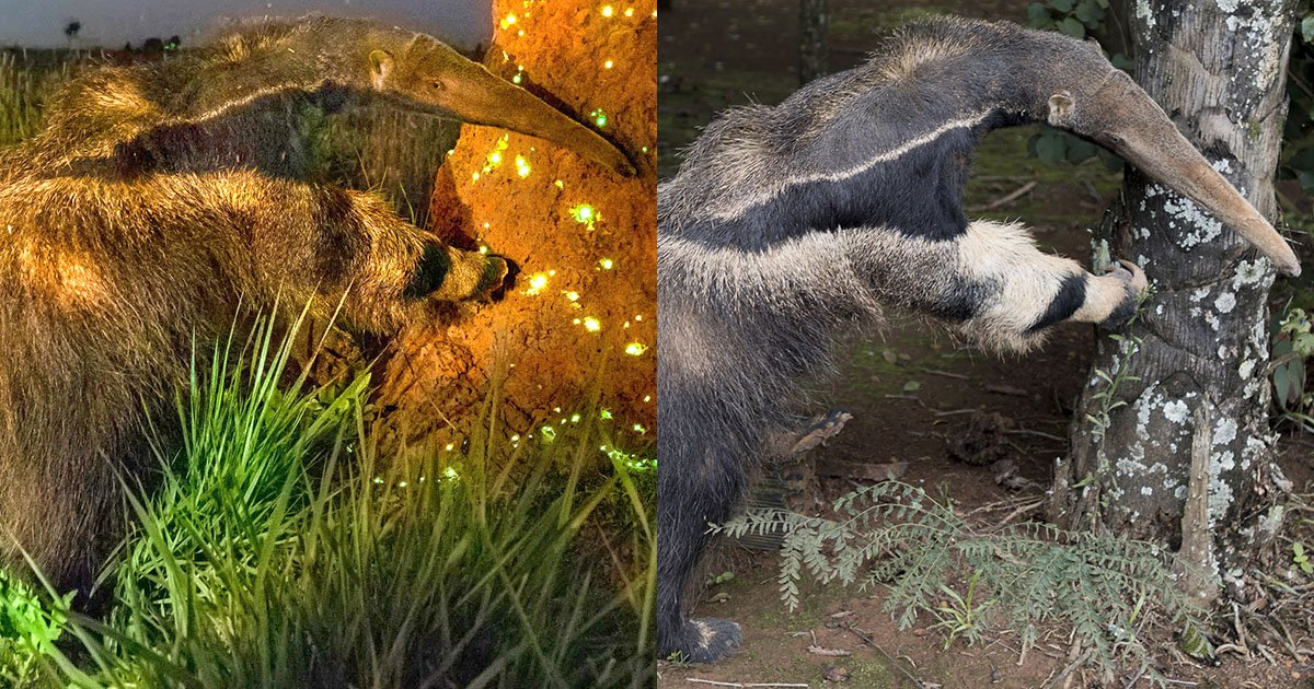 A Closer Look at the Stuffed Anteater Photo Contest Scandal