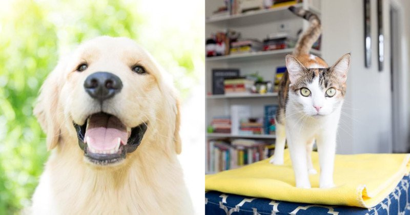 11 Tips for Photographing Your Dog or Cat Like a Pro